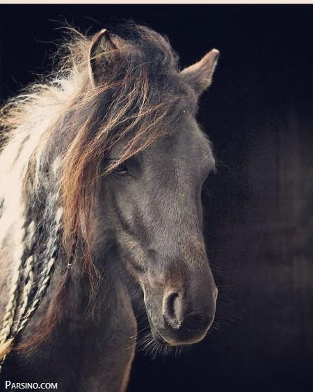 تصاویر اسب , عکس اسب , اسب های ایرانی , عکس های اسب خارجی