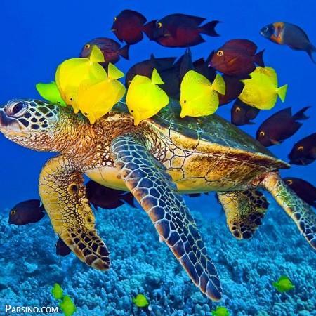 تصاویر لاک پشت , عکس های لاک پشت , عکس لاک پشت بزرگ , لاکپشت های کوچک