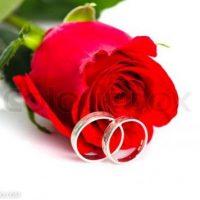 گالری عکس های گل رز قرمز