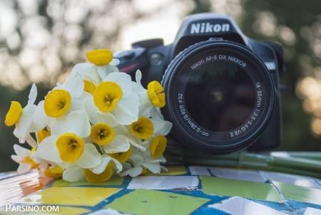 عکس گل , گل نرگس سفید , گل نرگس زرد