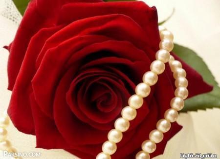 رز قرمز عاشقانه