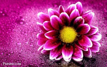 عکس پروفایل گل بنفش