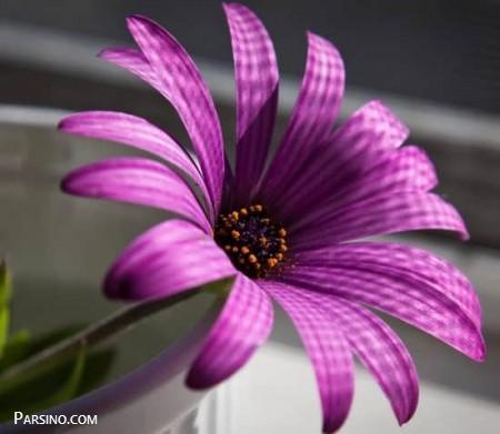 عکس پروفایل گل زیبا بنفش