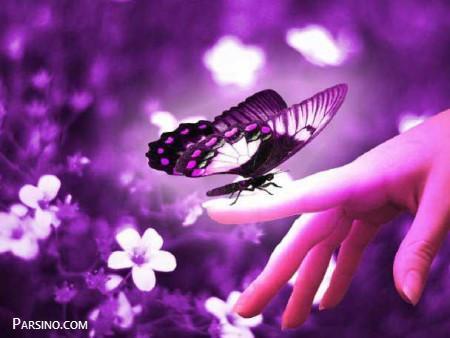 تصاویر و عکس پروانه های زیبا