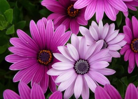 مجموعه عکس های گل صورتی کم رنگ و پر رنگ