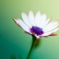 سری دوم عکس پروفایل گل