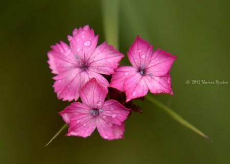 عکس گل فوق العاده زیبا برای پروفایل | تصاویر جذاب ترین گل های جهان