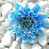 عکس پروفایل گل های زیبا برای تلگرام