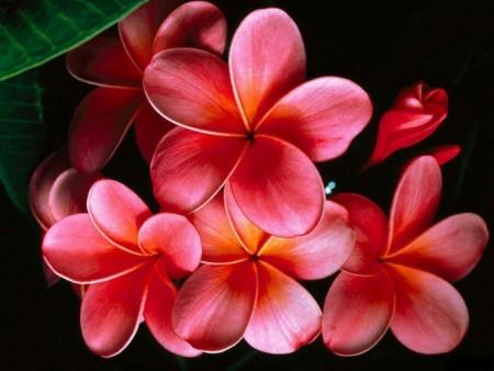 گالری عکس گل های بسیار زیبا و قشنگ برای پروفایل