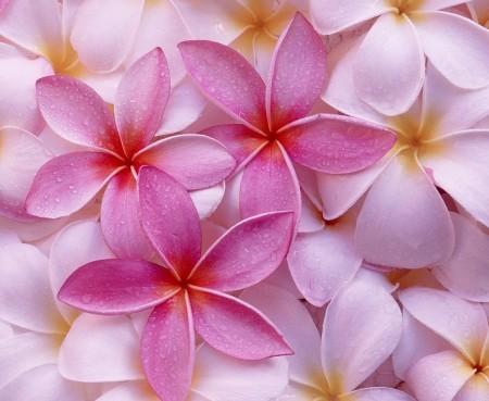 عکس پروفایل گل زیبا , عکس پروفایل گل برای تلگرام
