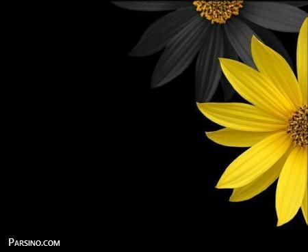 عکس پروفایل گل , عکس پروفایل گل زیبا
