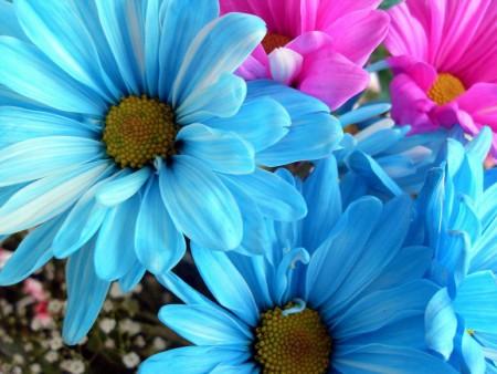 دانلود عکس گل آبی و صورتی بسیار زیبا برای پروفایل