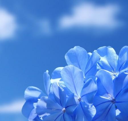 گالری عکس گل آبی با پس زمینه آسمان