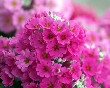 عکس گل کوچولو برای پروفایل , پروفایل گل زیبا