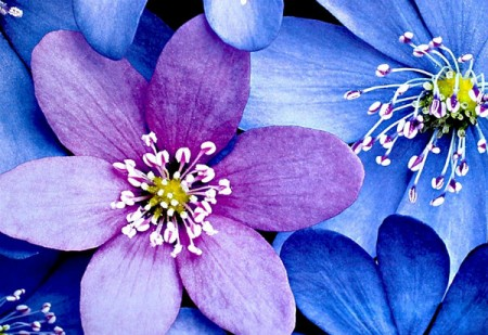 عکس گل های بنفش