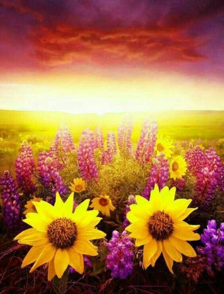 صبح روز افتابی , صبح بخیر برای روز برفی , صبح بخیر روز پاییزی