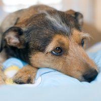 تعابیر کامل خواب دیدن سگ از منابع مختلف