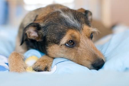 کشتن سگ در خواب , زدن سگ در خواب , توله سگ در خواب