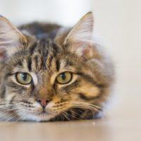 تعبیر کامل خواب دیدن گربه از منابع مختلف