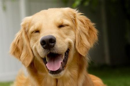 سگ در خواب , تعبیر سگ در خواب , معنی سگ در خواب