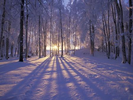 عکس جنگل برفی